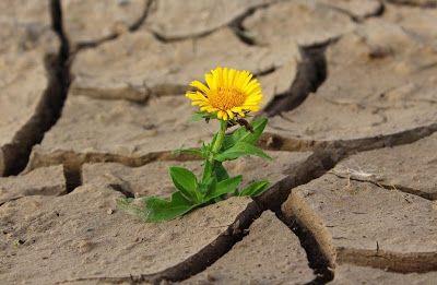 La resiliencia como fortaleza individual